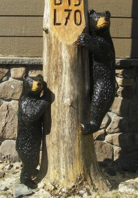 Climbing Bear Cub – On Sign Post