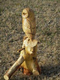 Jack Pine Owl